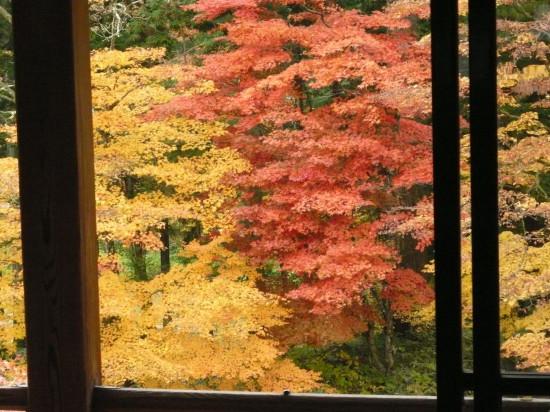 Maple colour Im. Villa