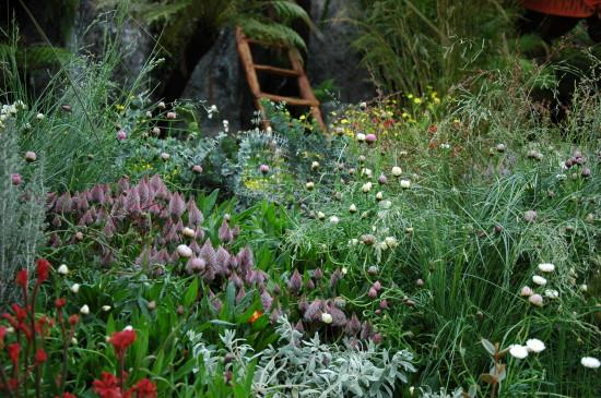 Chelsea 2013 Best in Show garden showing mass-planted west Australian wildflowers