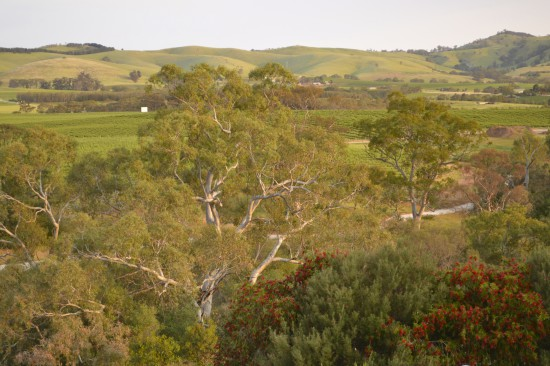 Barossa Valley view with vines