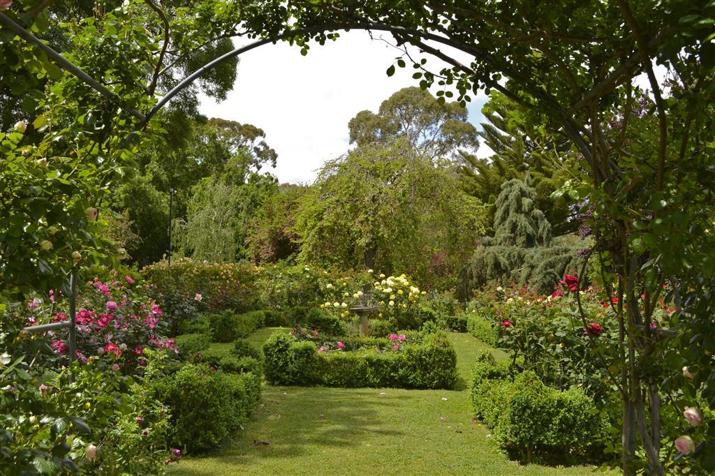 Gardens of south australia and victoria ross garden tours for Garden trees adelaide
