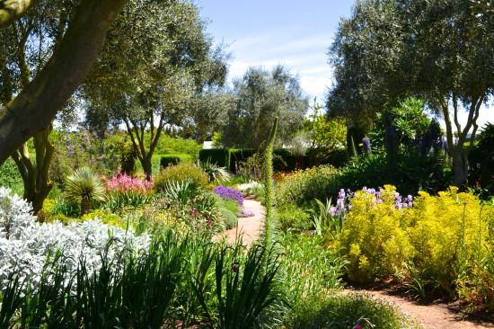 Dry garden at Lambely Nursery