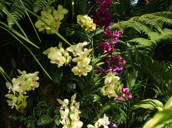 Orchids in Cloud Forest Biodome