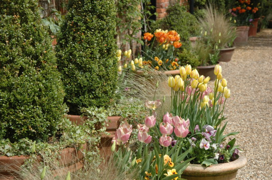 West Green House tulip pots (1)