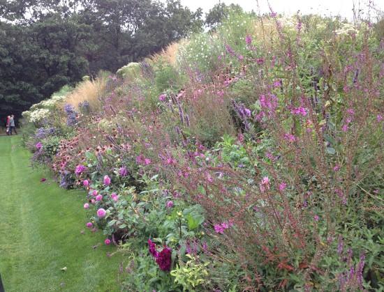Floriade Pink border
