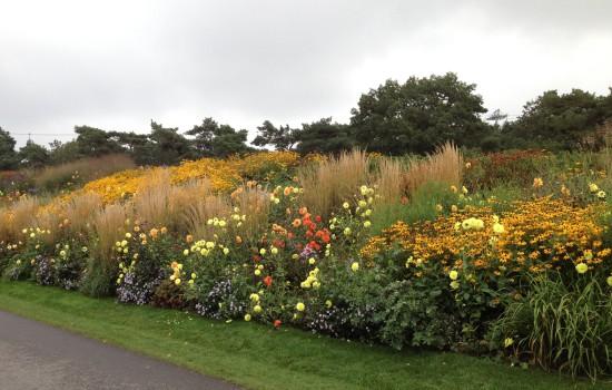 Floriade yellow border