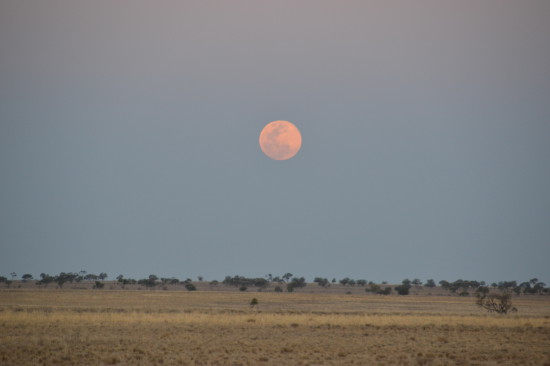 Moon rise, Mitchell plains, outback Queensland