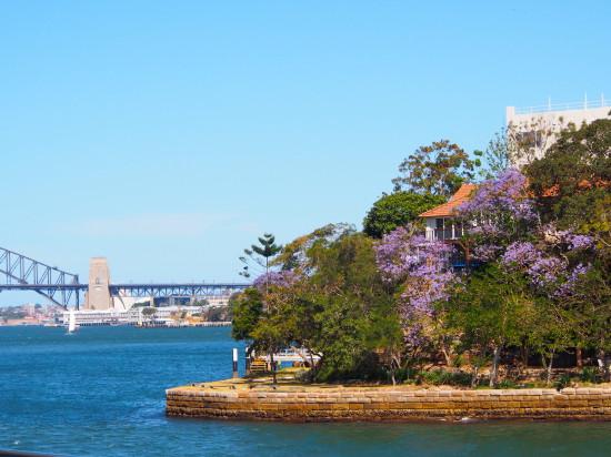 Jacaranda Cruise, Sydney harbour