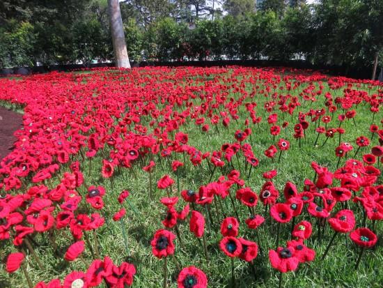 5000 poppies 2