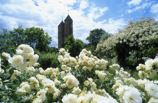 Elizabethan Tower where her writing room remains today through the clouds of white roses in the white garden, June.