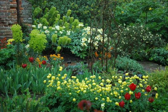 Cram, cram, cram!  Great advice from Vita! South Garden spring exuberance of lime Euphorbia, single lemon peonies. Photo - Linda Ross