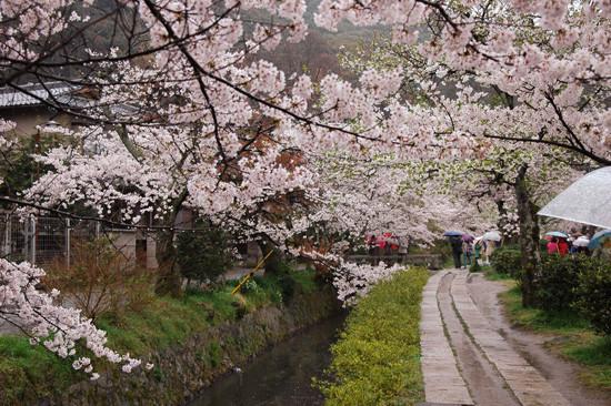 pic11-japan-cherries-kyoto-philosophers-walk_LR_0433-(2)