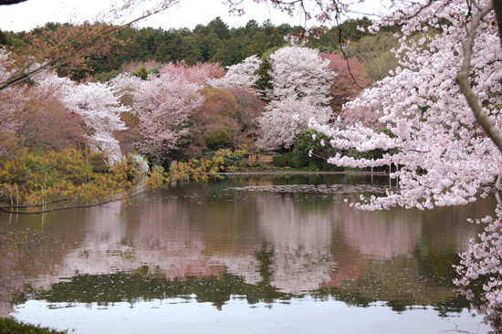 pic13-japan-cherries-lake-stone-garden_LR_0457