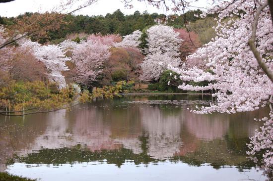 pic13-japan-cherries-lake-stone-garden_LR_0457