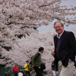 Was this the best year for cherry blossoms?