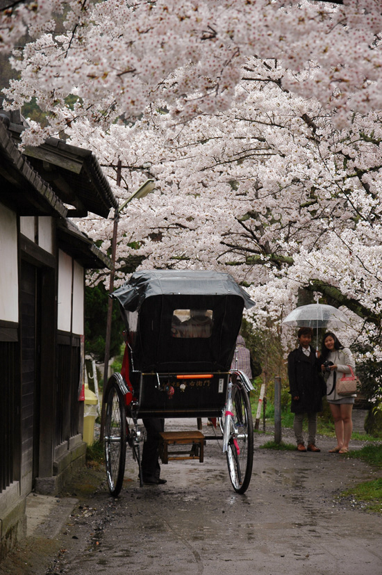 pic6-japan-cherries-kyoto-philsophers-walk_LR