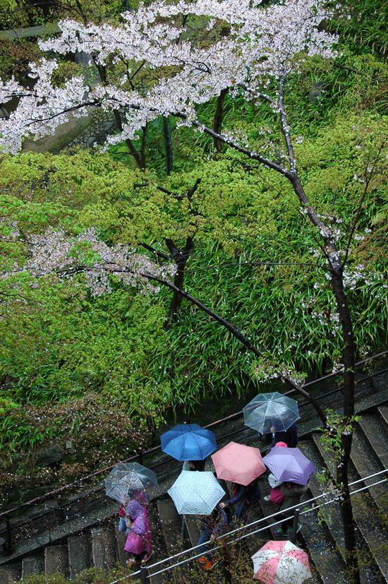 pic7-japan-cherries-kyoto-kiyomizu-temple-raindrops_DSC_0023