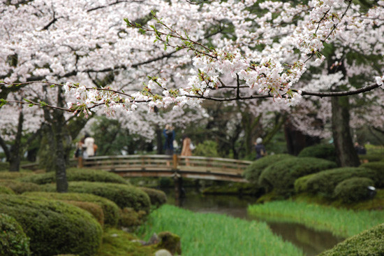 pic8-japan-Kenrokuen-cherry-bridge_LR_0121
