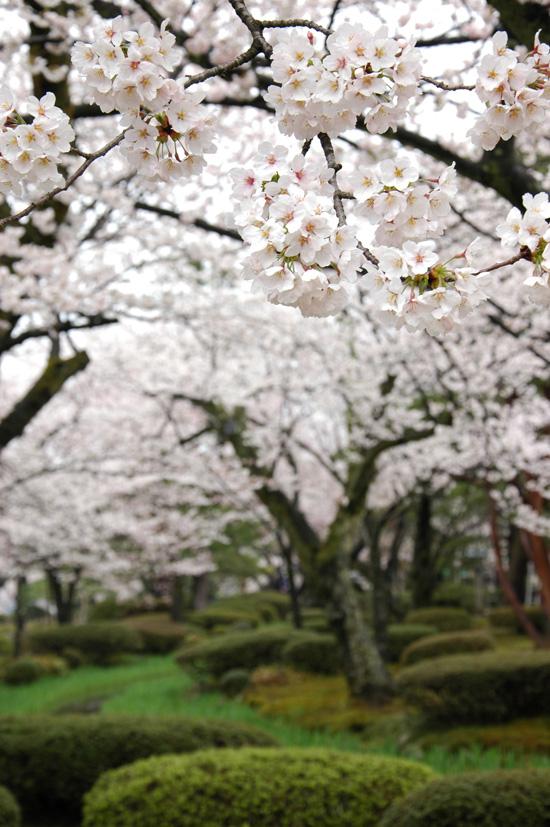 pic8-japan-Kenrokuen-cherry-bridge_LR_0155