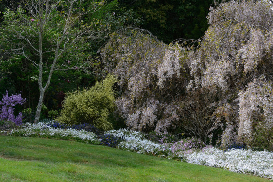 In spring Merry Garth is a froth of blossom. Photo - Chris L Jones