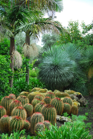 Blending cactus with tropicals. Photo - Michael McCoy