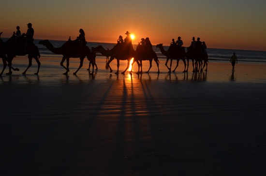 Camel train at sunset, Cable Beach, Broome. Photo - Angus Stewart