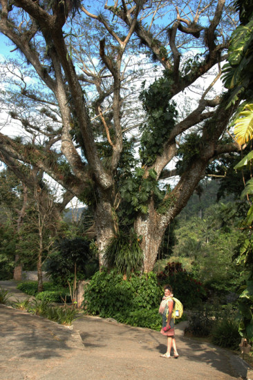 Linda under one of the enormous tilandsia-covered trees at the Orchidario Soroa. Photo - Dan Wheatley